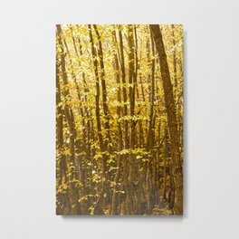 Autumn Splendour Metal Print