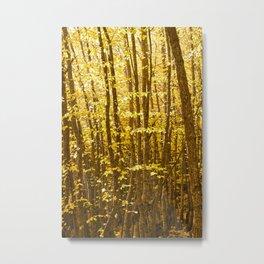 Autumn Splendour Metal Print