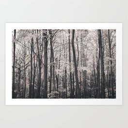 Deep in Woodland Art Print