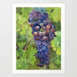 Grapes Watercolor Fruit Food Wine Lovers Art Print