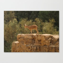 Yael Canvas Print