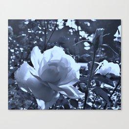 roses VII Canvas Print