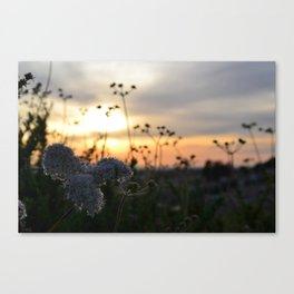 Nestled in the dusk Canvas Print