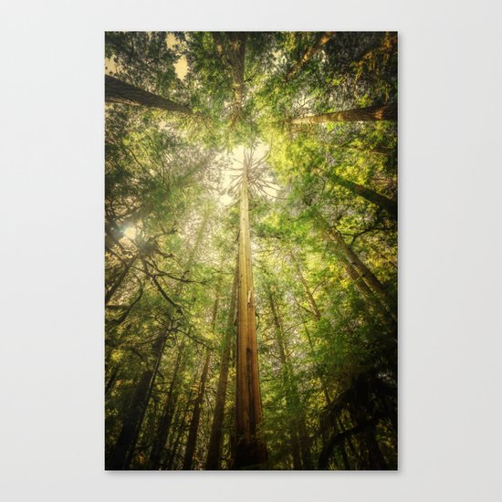 Forest Tree Tops Canvas Print