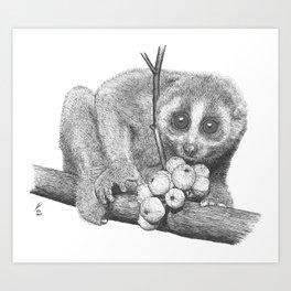 Slow Loris (Kera Duku) Art Print