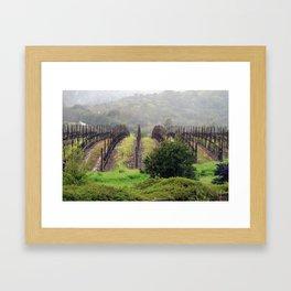 Napa Valley Vineyards, California - Mist and Rows Framed Art Print