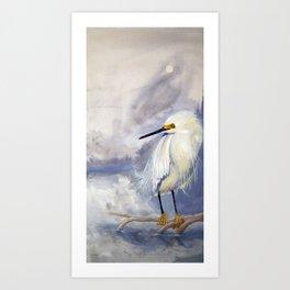 Great White Heron (Ardea alba) Art Print