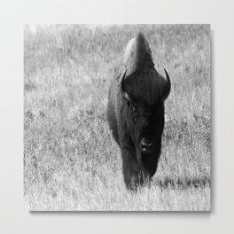 Bison - Monochrom Metal Print