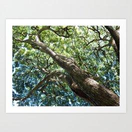 waimea tree Art Print