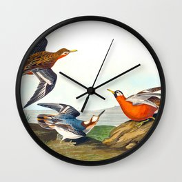 Red Phalarope Bird Wall Clock