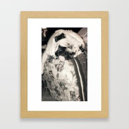 lazy pug Framed Art Print