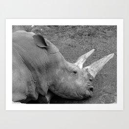 Rhinoceros Art Print