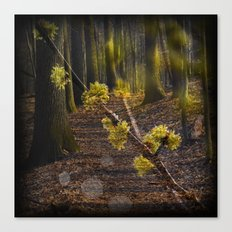 Walking through the forest in early spring Canvas Print