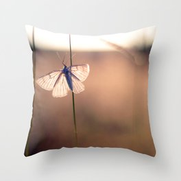 Butterfly on a blade of grass during the sunset Throw Pillow