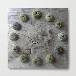 Urchin Circle Metal Print