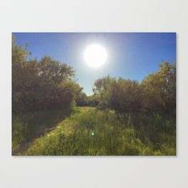 Sunshine on the path Canvas Print