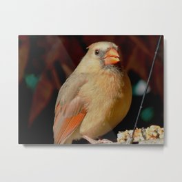 Beaming cardinal Metal Print