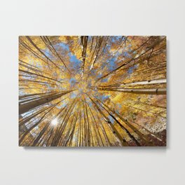 Colorado Autumn  Splendor  Metal Print