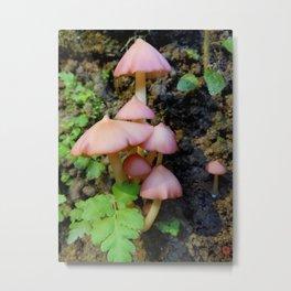 Rainforest Pink Mushroom Metal Print