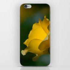 Walking On Sunshine Rose iPhone Skin