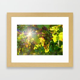 Wine Grapes in the Sun Framed Art Print