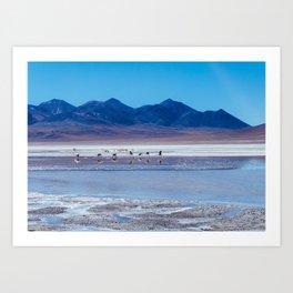 Flamingoes in the Atacama Desert, Bolivia Art Print