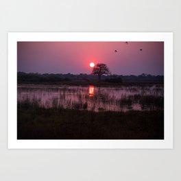 Botswana Africa Sunset over a Marsh Art Print