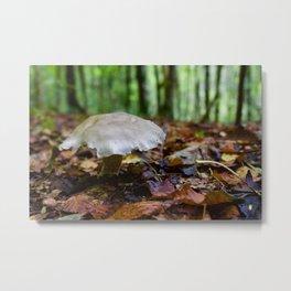 Mushroom In Forest Metal Print