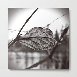 Lakeside leaf Metal Print