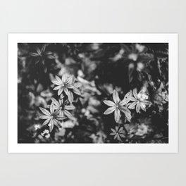 Floral studies II Art Print
