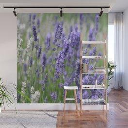 Lavender in field Wall Mural