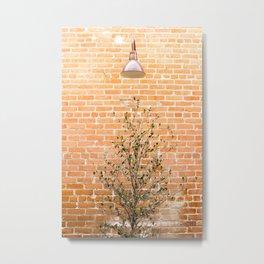 Street photography lamp & tree I Metal Print