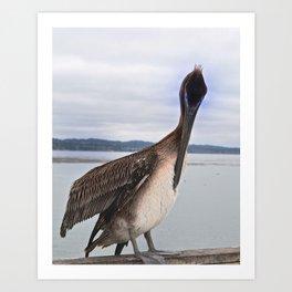 Capitola Pelican Art Print