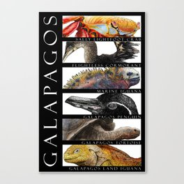 Animals of the Galapagos Canvas Print