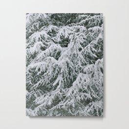 Snowy Boughs Metal Print