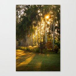 Sunburst at Litchfield National Park Canvas Print