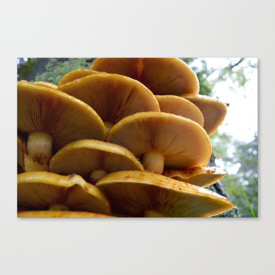 Another autumn Canvas Print