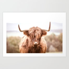 Highland Cow in a Field Southern Art Print