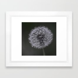 Dandylion Framed Art Print