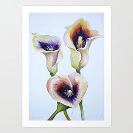 Sublime Bouquet Arum Calla Lilies in Watercolor Art Print