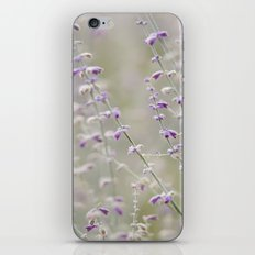 Purple Envy iPhone & iPod Skin