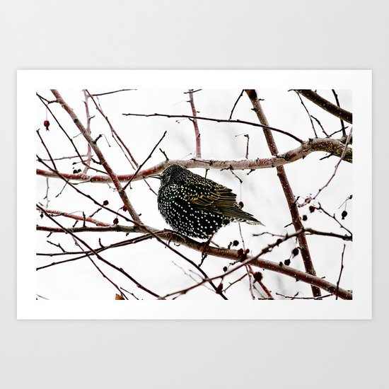 oh starling Art Print