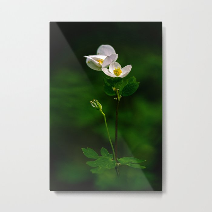 out of the green Metal Print