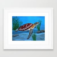 sea turtle Framed Art Prints featuring Sea turtle  by maggs326