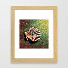 Seashell Framed Art Print