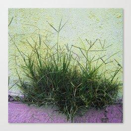 Minimal Flora - Hanging Garden Canvas Print
