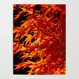 AUTUMN LEAVES - RED MAPLE Poster