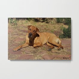 """Born Free"" from the photo series, ""My dog, PLaY-DoH"" Metal Print"