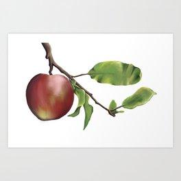 Red Apple on Branch Art Print