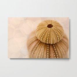 Double Urchin Metal Print